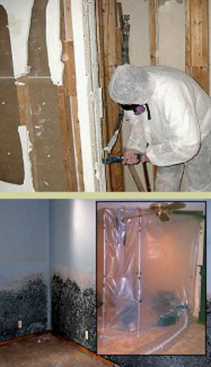 GreenStar Commercial Mold Remediation