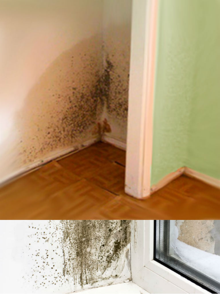 Greenstar Residential Mold Remediation