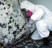 Master Service Pro Residential Mold Inspection